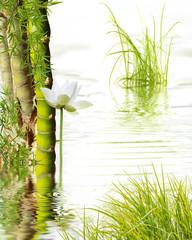 bambou à noeud, lotus blanc et herbes aquatiques