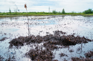 Environmental pollution. Oiled land after the oil pipeline accident.