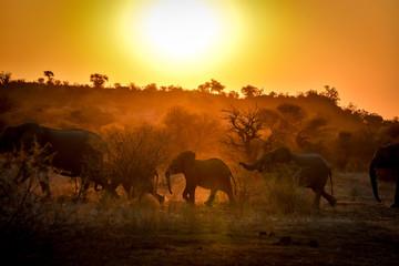 Silhuoette einer Elefantenherde im Abendlicht