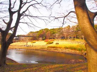 Foto op Aluminium Zwavel geel The scenery of the park, January, Chiba, Japan