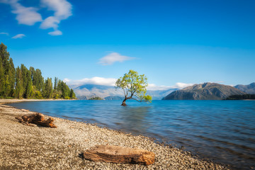 Clear blue morning at lake Wanaka with a symbolic willow tree just of the shore of lake.