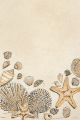 drawings of shells and with starfish,