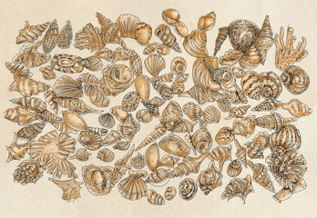 drawings of shells