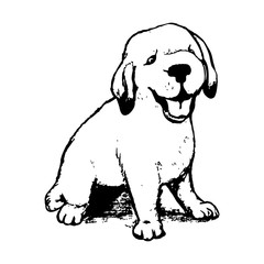 Labrador puppy graphics