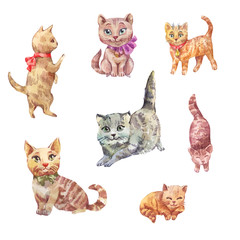 Watercolor cats. Cute pets illustration.