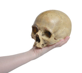 Human skull  and female hand