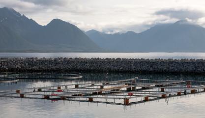 fish growing farm