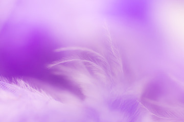 Close Up purple feather .Image use for background texture, abstract