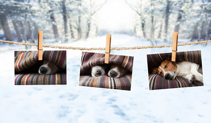 cute photos of dogs on string in winter
