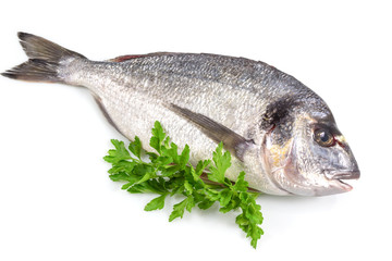 Fresh fish with green basil isolated in white background with clipping path.