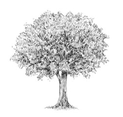 Tree  handdrawing isolated on white.