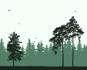 Vector illustration of pine forest with birds