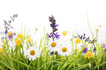 Fototapeta Frühlingswiese vor weißem Hintergrund obraz