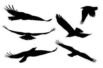 Set of realistic vector silhouettes of flying birds