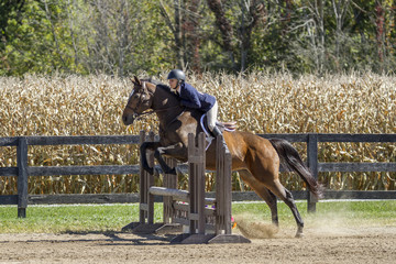 Young woman and bay gelding over jump