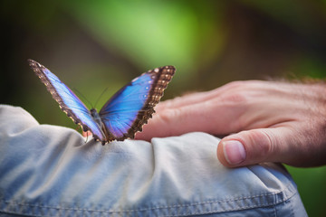 Couple holding a tropical butterly (Blue Morpho).