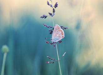 cute little blue butterfly sits on a blade of grass on the summer meadow beautiful