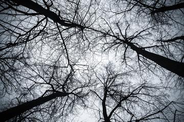 Bare trees under bright sky, toned photo