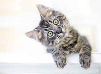 A young kitten gazing at the viewer curiously with a head tilt