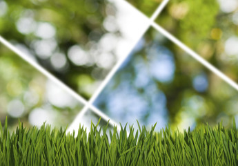 image of grass in the park on green background closeup
