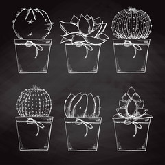 Sketch succulents in pots isolated on the chalkboard. Vector illustration.