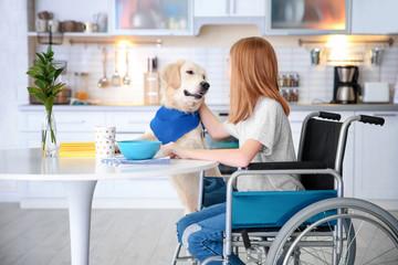 Service dog near girl in wheelchair indoors