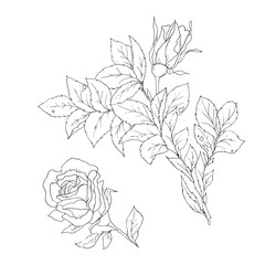 Vector set of detailed, isolated outline Rose bud sketches in black color.