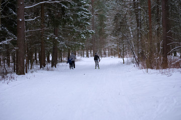 Skiers in the woods.