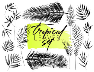 Set of tropical leaves, hand drawn ink brush images isolated on white background. Vector illustration. Floral elements for design. Palm leaves.