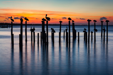 Pelican and Pier Piling Sunset Silhouettes