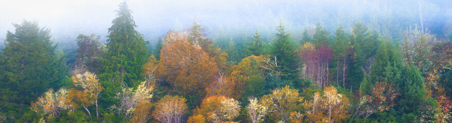 Panoramic banner Oregon Pacific Northwest forest fall colors masthead for web design