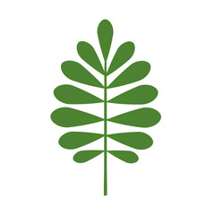 Green plant leaf. Isolated vector illustration on white background.