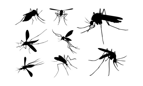 Set of Mosquito Silhouette vector illustration, Close Up Mosquito Silhouette