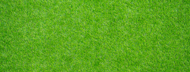 Foto auf AluDibond Gras grass field background. green grass. green background
