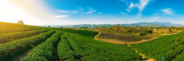 Panoramic scenery of tea plantation at Chieng Rai Thailand Wall mural