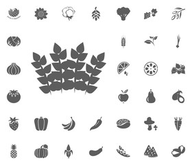 Mint icon. Fruit and Vegetables vector illustration icon set. food and plant symbols.