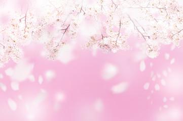 満開の桜 花吹雪 春イメージ