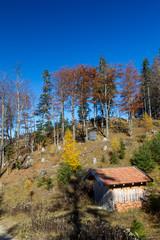 Herbstwald auf den Bergen bei Pfronten im Allgäu in Bayern, Deutschland.