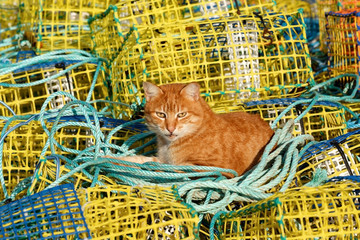 Orange Cat Laying in Fishinggear Tools for fishing in Estepona in Andalucia Spain