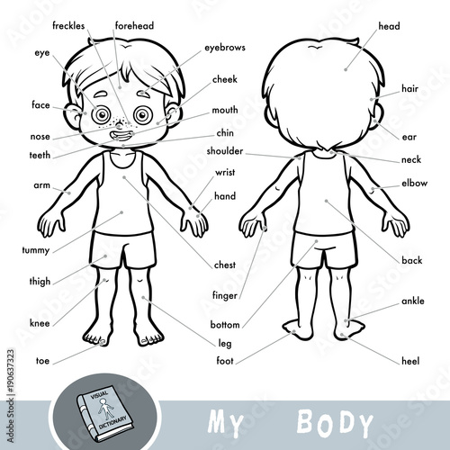 Visual dictionary for children about the human body. My body parts ...