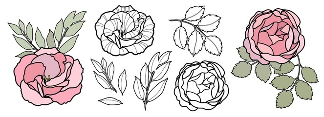 Hand draw line vector flowers set for card. Peony, rose illustration. Floral logo design.