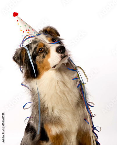 Anniversaire De Chien Stock Photo And Royalty Free Images On