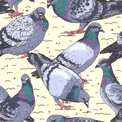 Hand-drawn seamless pattern with pigeons, Urban birds