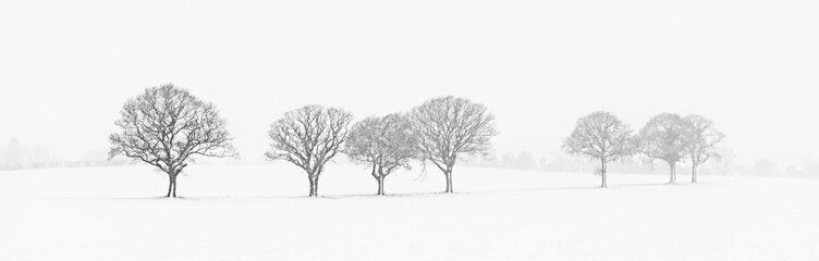 Tree Line In The Snow