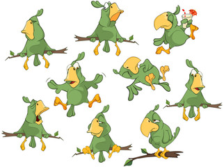 Set of Cute Green Parrots for you Design