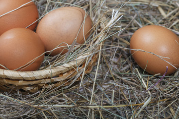Easter composition. A few eggs in a straw basket on the background of dry hay closeup