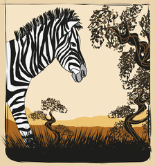 Wild africa card with zebra