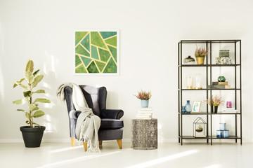 Ficus in cozy living room