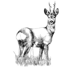 deer stands in the dry grass sketch vector graphics monochrome drawing