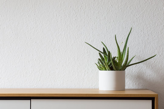 Modern living, succulent on sideboard